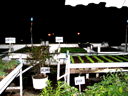 Rooftop gardens at Seu Faustino's - Photo by Angel Romero